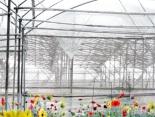 flower farm-Ciro Totku